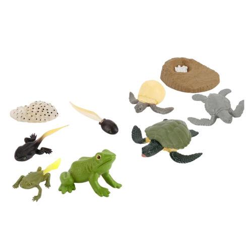 Modèle De Jouet De Figurines De Processus De Croissance Animale Réaliste Pour