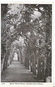 Middlesex-Postcard-Queen-Mary-039-s-Bower-Hampton-Court-Palace-XX853