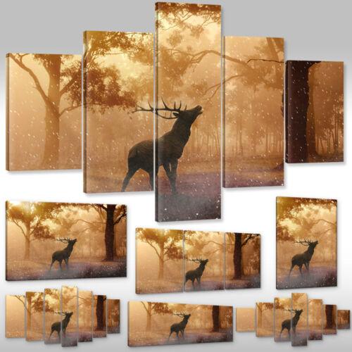 Leinwandbild Canvas Wandbilder Kunstdruck Tiere Hirsch im Wald Hirschgeweih