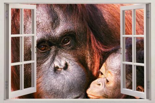 Orangutan Monkey 3D Window Decal Graphic Wall Sticker Art Mural Animals H429