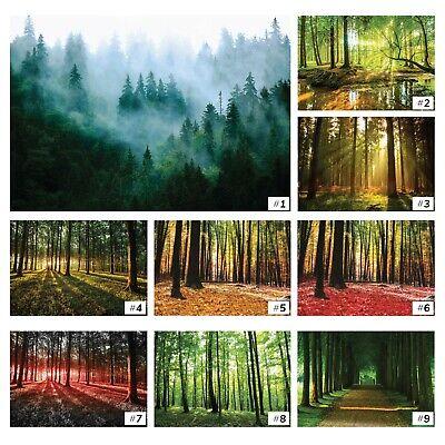 VLIES   Fototapete Tapete Vliestapete XXL Wald im Nebel 15F0414360