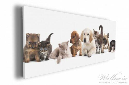 Wallario Leinwandbild 30 x 75 cm Hundewelpen Katzenjunge Hund Hunde Katze Katzen