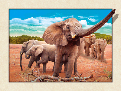NEW 3D  MOVING PICTURE 400mm X 300mm ELEPHANT FAMILY