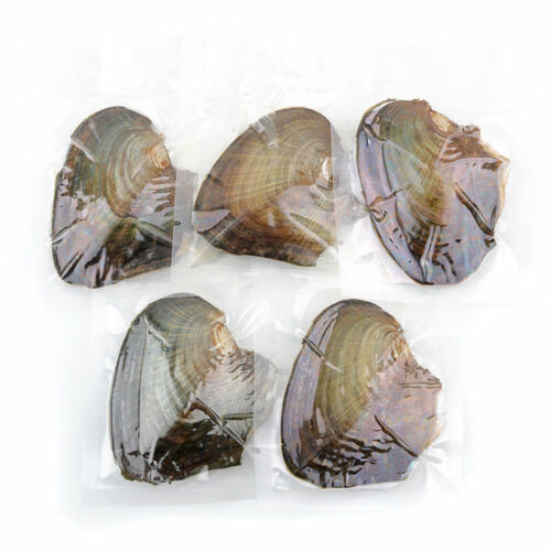 1pc//5pcs//10pcs//25pcs Individually Wrapped Oysters with Large Pearl Birthday Gift