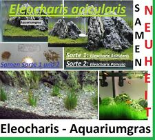 60x Eleocharis parvula und acicularis Aquarium Samen Wasser Pflanze Aqua #288