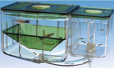 Penn Plax Aquarium Nursery Hatchery For Guppy Molly Swordtail Fish FREE GIFTS