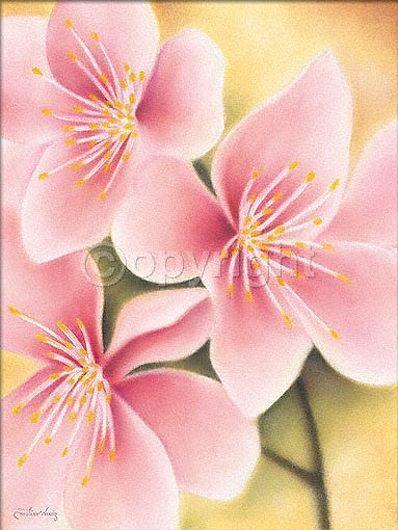 Caroline Little : délicat POMME Tableau prêt prêt Tableau 60x80 Mural Fleur de pommier 4a101b