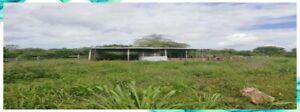 Oportunidad Rancho de 31 Hectareas es Propiedad a 17 Kms de Campeche c Luz Agua 100 arboles fruta