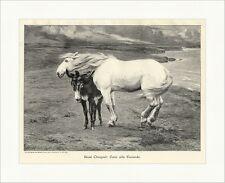 Zwei Alte Freunde Rene Choquet Tiere Pferd Esel Küste Schimmel Holzstich A 1858