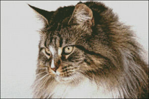 Maine coone CAT CROSS STITCH KIT