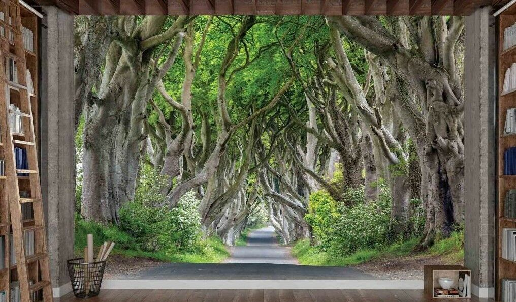 Dark Hedges, Antrim County in North Ireland-12' x 8'-(3,66m x 2,44m)-Wall Mural