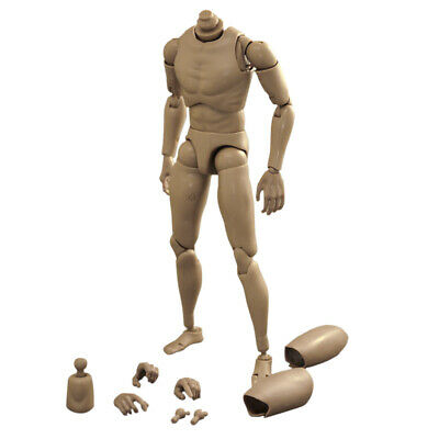 1/6 Scale Narrow Shoulder Male Nude Action Figure Muscle