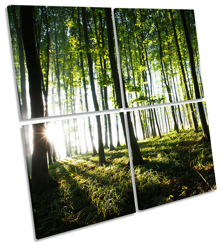 Forest Landscape Trees MULTI CANVAS WALL ART Square Print