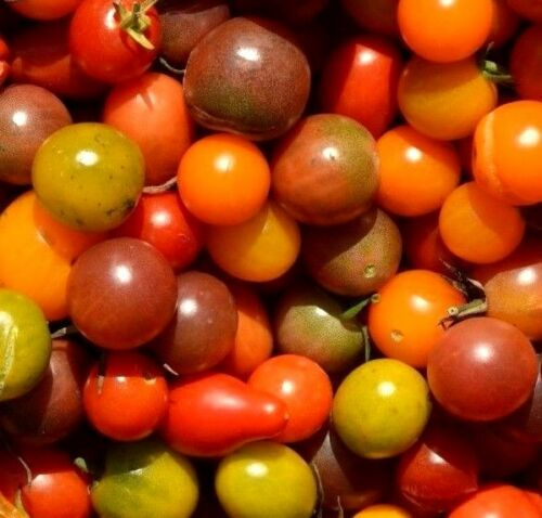 SMALL CHERRY HEIRLOOM TOMATO MIX Red Orange Yellow Black Round Pear 20 Seeds