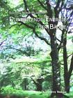 Die heilende Energie der Bäume von Susannah Beurer-Hildebrandt (2013, Gebundene Ausgabe)