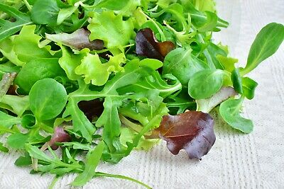 French Italian Lettuce 4 packs Mild,Spicy MESCLUN SEEDS SAMPLER Field Greens