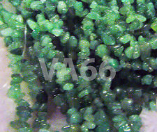 "DIY 35"" Green Aventurine Gemstone Chips Genuine Gemstones Loose Beads Batu Asli"