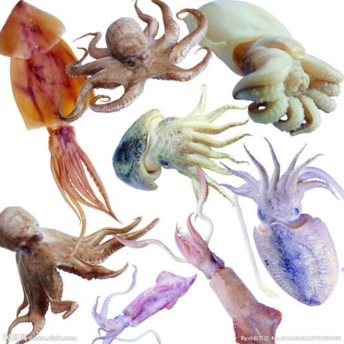Telescope Fishing Gaff Carbon Octopus Tools Terminal Tackles Squid Landing Hooks
