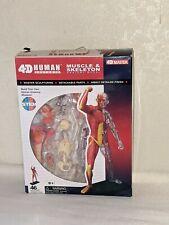 4d Master Human Anatomy Muscle Amp Skeleton Anatomy Model