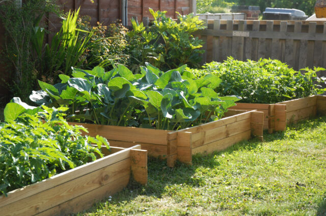 Wooden Timber Raised Grow Bed Your Own Vegtables Plants Planter Patio 1MSQ H20CM