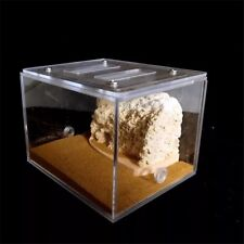Bionic Acrylic & Gypsum Ant Nest Housing Ant Farm Formicarium For Ant Colony