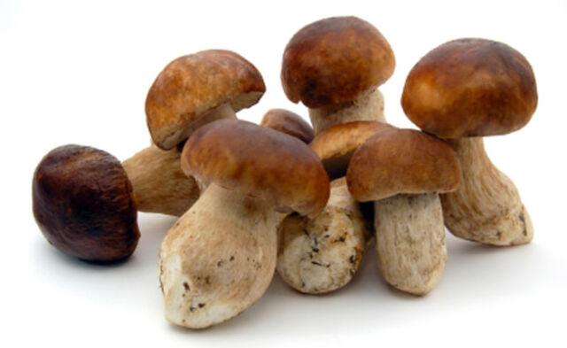 Porcini Mushrooms Frozen 2 2 Lbs For Sale Online,Crockpot Chicken And Noodles