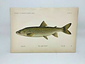 Scarce-First-Denton-Fish-Print-1889-Lake-Trout-Original