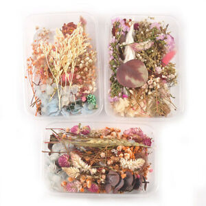 1 Box Mixed Dried Flower Eucalyptus Photo Frame Handmade Soap Candle Epoxy DIY