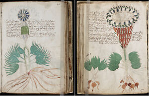 THE-MYSTERIOUS-VOYNICH-MANUSCRIPT-CIPHER-CRYPTOGRAPHY-UNSOLVED-CODE-ON-DVD