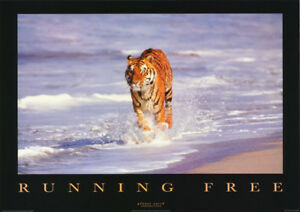 POSTER-ANIMAL-RUNNING-FREE-TIGER-IN-WATER-FREE-SHIPPING-PE1066-RBW1-S