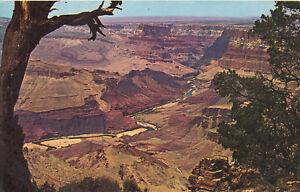 Chrome-Postcard-A560-Grand-Canyon-National-Park-Arizona-AZ-Petley-Colorado-River