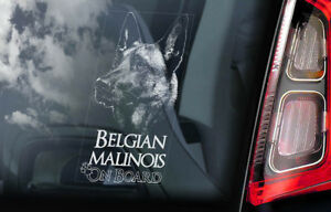 Belgian Malinois on Board - Car Window Sticker - Mechelse Dog Sign Decal - V18