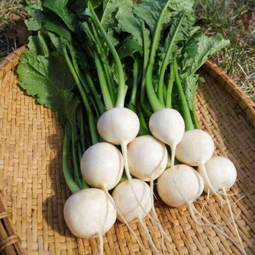 TURNIP TOKYO MARKET 50 Seeds HEIRLOOM vegetable garden ASIAN COOL SEASON plant