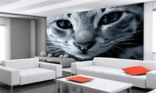 Cat Eyes Wall Mural Photo Wallpaper GIANT DECOR Paper Poster Free Paste