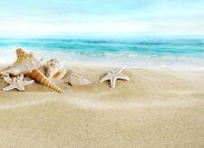 STARFISH PEBBLES SEASHELLS BEACH PHOTO ART PRINT POSTER PICTURE BMP1296A