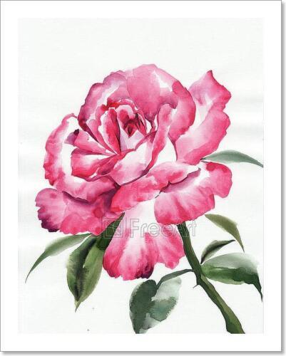 C Pink Rose Art Print Home Decor Wall Art Poster
