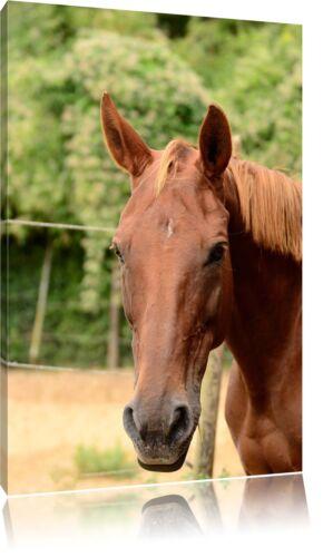 anmutiges Pferd Leinwandbild Wanddeko Kunstdruck