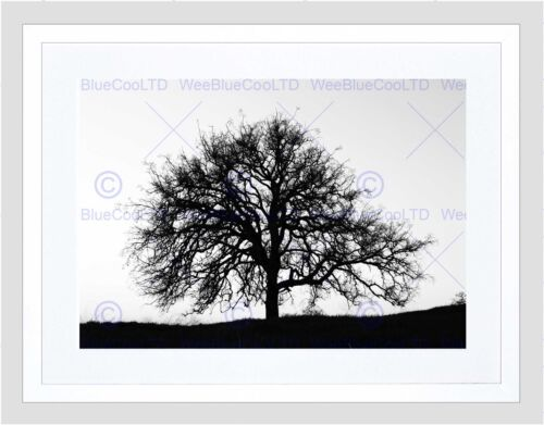 PHOTO TREE SILHOUETTE BLACK WHITE COOL STARK BLACK FRAMED ART PRINT B12X7631