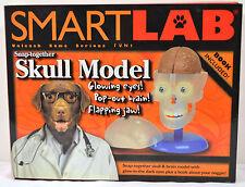 SmartLab Snap- Together Skull Model