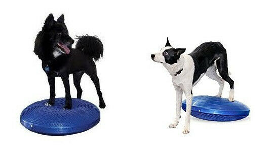Core Stability Balance Fitness  Strengthen Disc For Dogs 24