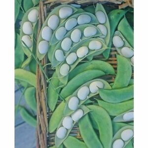 039-Lima-Bean-Henderson-Bush-Heirloom-Garden-Vegetable-Seeds-1-oz-aprox-78-80ct