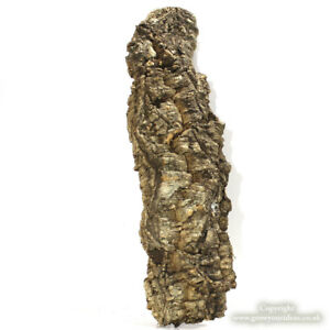 Large-cork-bark-piece-42L-x-13W-x-5D-cm-Air-plants-or-pet-terrariums-WYSIWYG
