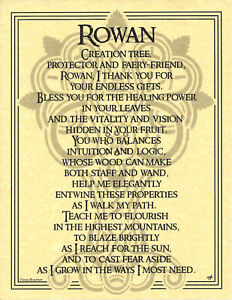 Poster-ROWAN-TREE-FAIRY-PRAYER-Pagan-Wicca-Book-of-Shadows-Guide-Page-8-1-2x11