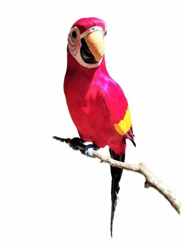 X-Large Handcrafted Ultra Lightweight Parrot with Real Feathers//Bendable FEET!
