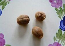ÉPICE NOIX DE MUSCADE ( 3 noix ) ( 3 nutmeg)