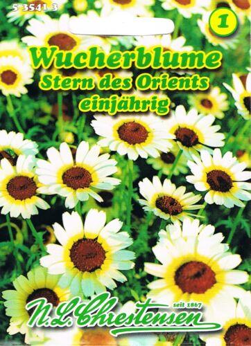 535413 Wucherblume Stern des Orients Chrysanthemum   Blumen Saatgut  Mischung