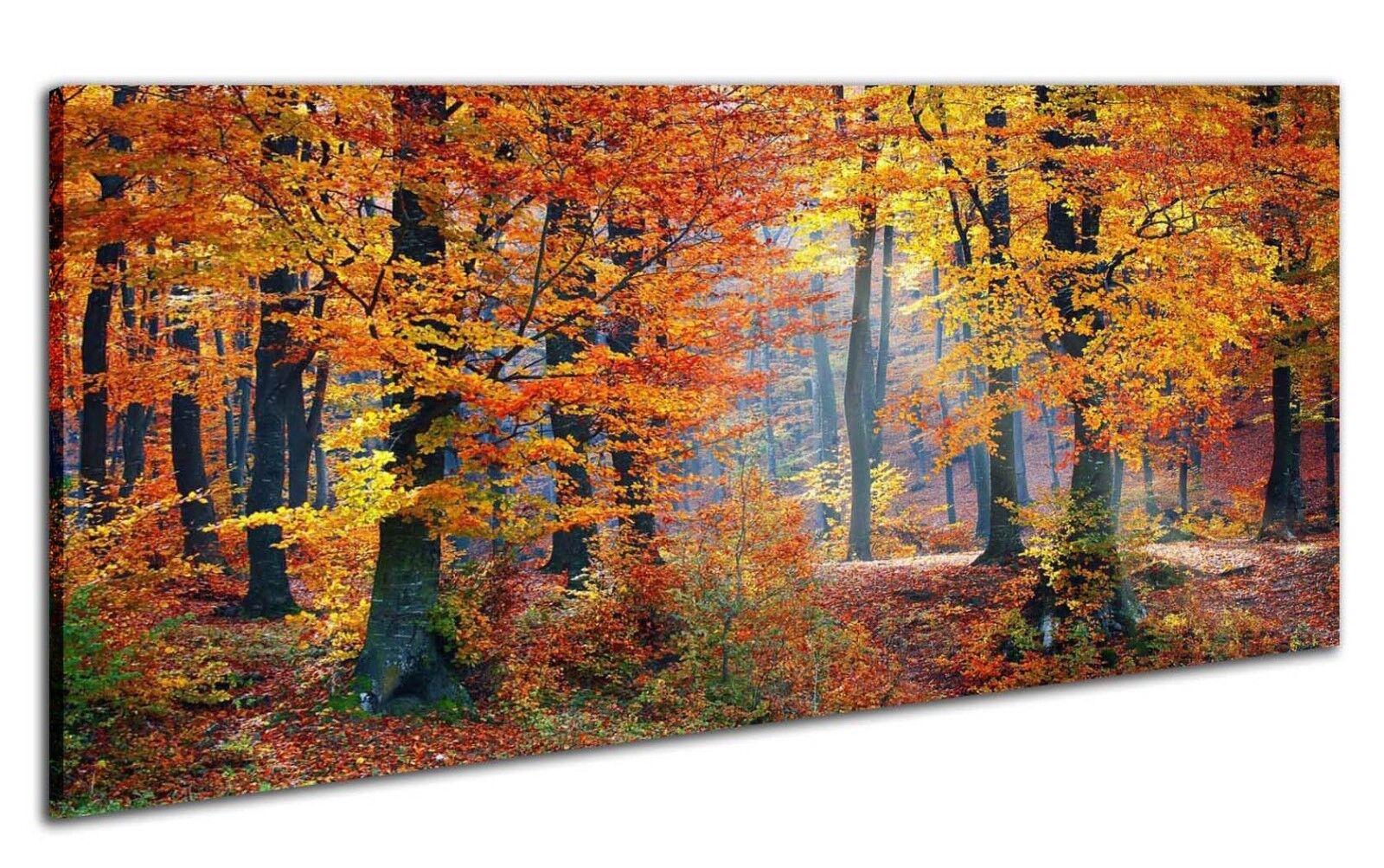 Leinwand Panorama Bild Wandbild Keilrahmenbild Herbst Wald Bäume Blätter Wald Na