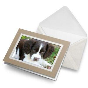 Greetings-Card-Biege-English-Springer-Spaniel-Puppy-Dog-15723