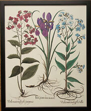 Botanical III by Besler, 20''x16'' frame, rare botanical wall art