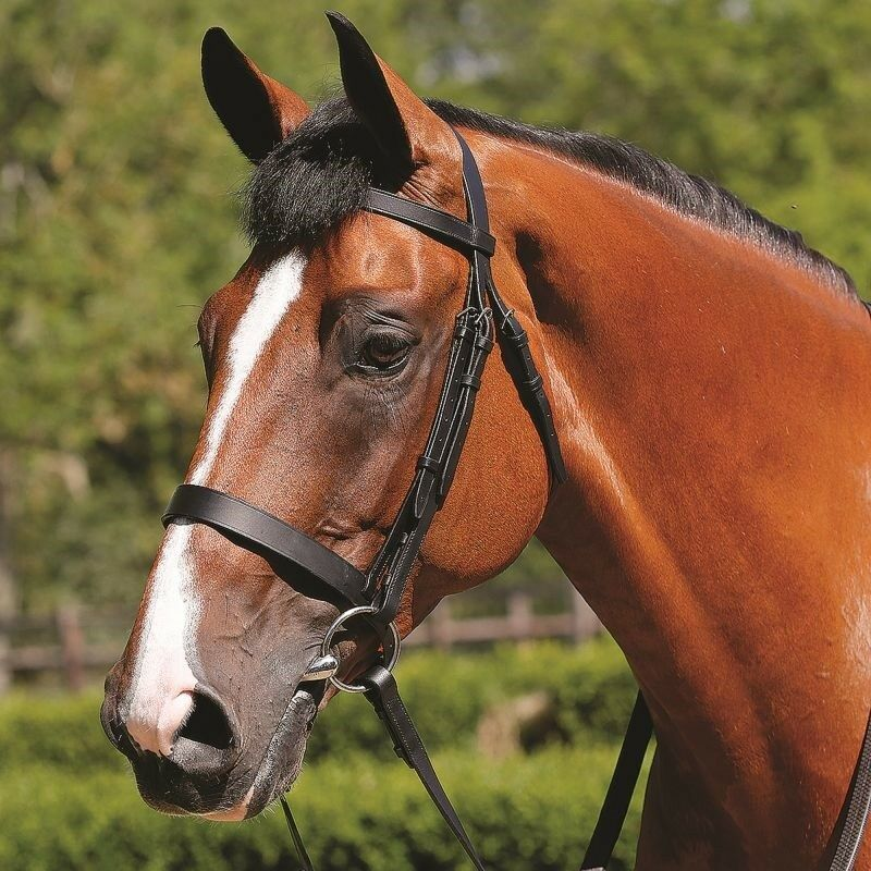 JHL Traditional Plain Leather Cavesson Bridle .Good quality leather inc reins